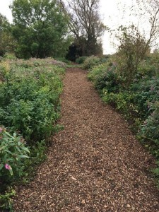 Oldways pathway phase 2 now mulch has been spread September 2017